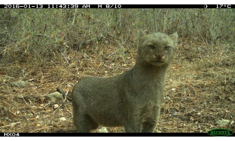 Students around the globe collect quality, eye-opening research data on mammals