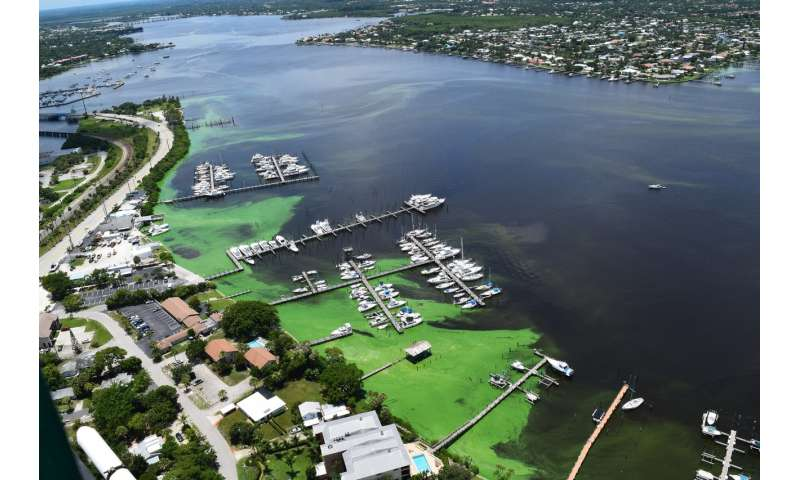 Study finds source of toxic green algal blooms and the results stink