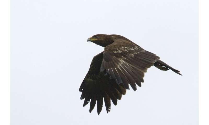 Study of bird migration tricky due to hybridization