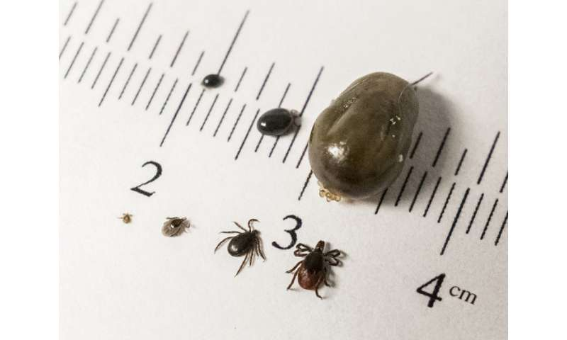 Study of tick-borne disease dynamics could thwart future outbreaks