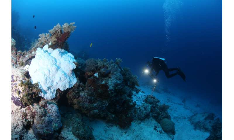 Study says coral bleaching on the Great Barrier Reef not limited to shallow depths