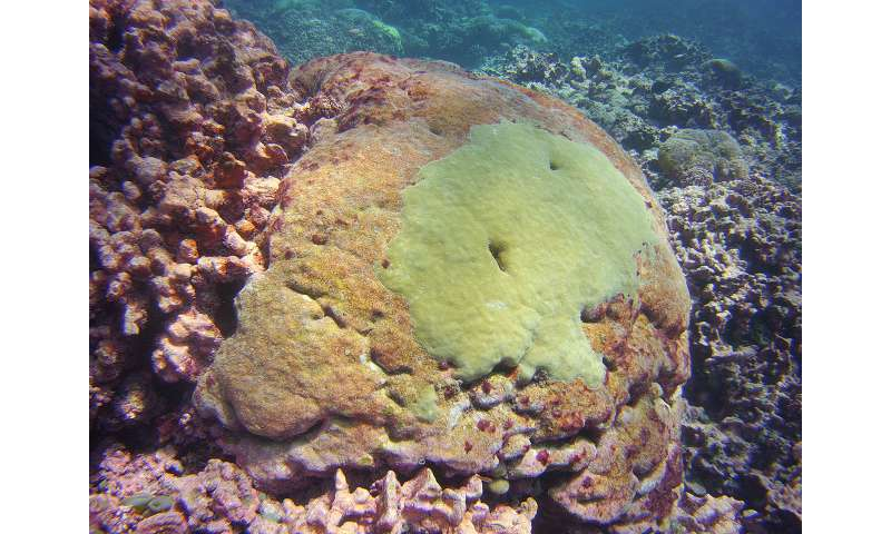 Study tracks severe bleaching events on a coral reef in the Pacific over the past century