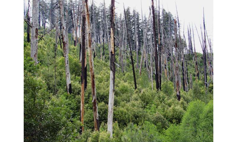 Study: Warming future means more fire, fewer trees in western biodiversity hotspot