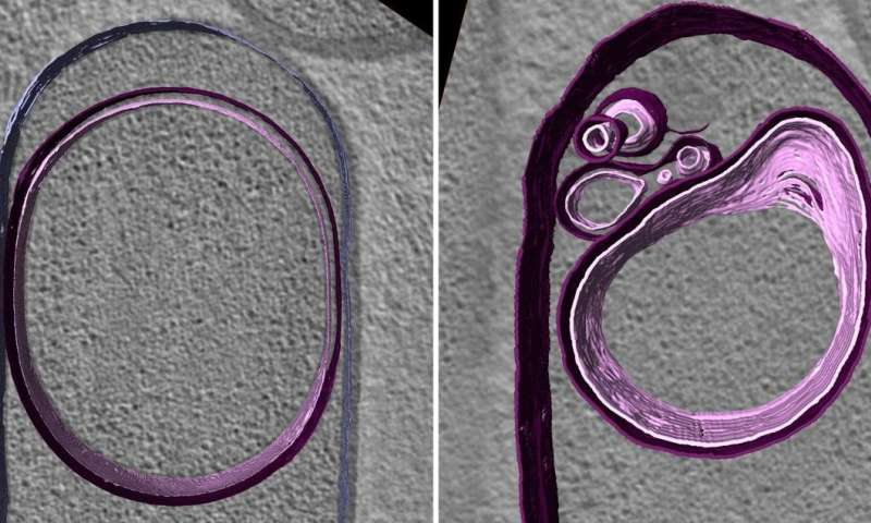 Surprise finding points to DNA's role in shaping cells