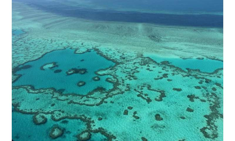 The Great Barrier Reef has been battered by bleaching caused by rising sea temperatures