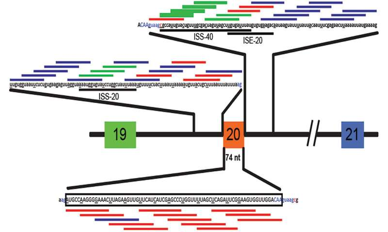 Therapeutic RNA corrects splicing defect that causes familial dysautonomia