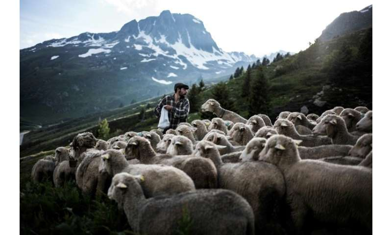 There are about 1,000 shepherds left in France today