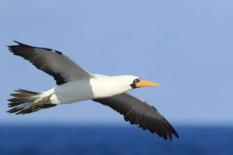 The survival of sea birds affected by ocean cycles