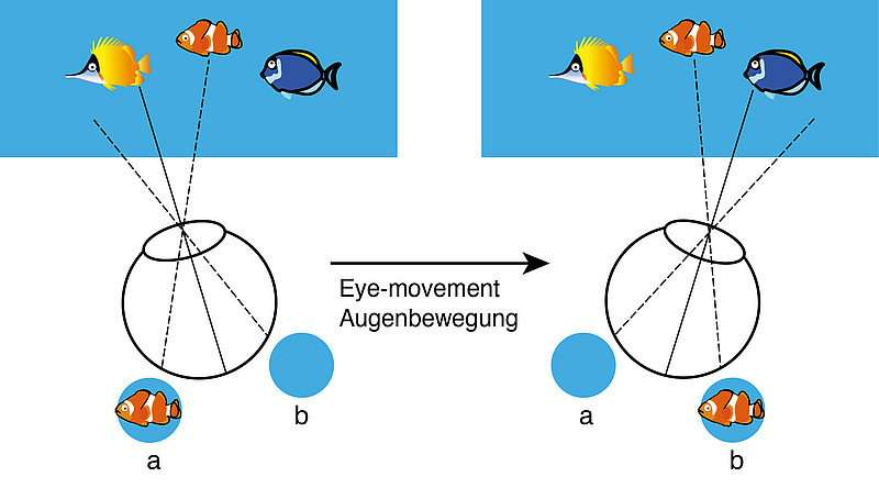 The visual system optimally maintains attention on relevant objects even as eyes move