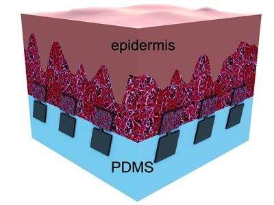 Tiny scales could serve as safe material in implants to reinforce bones and joints