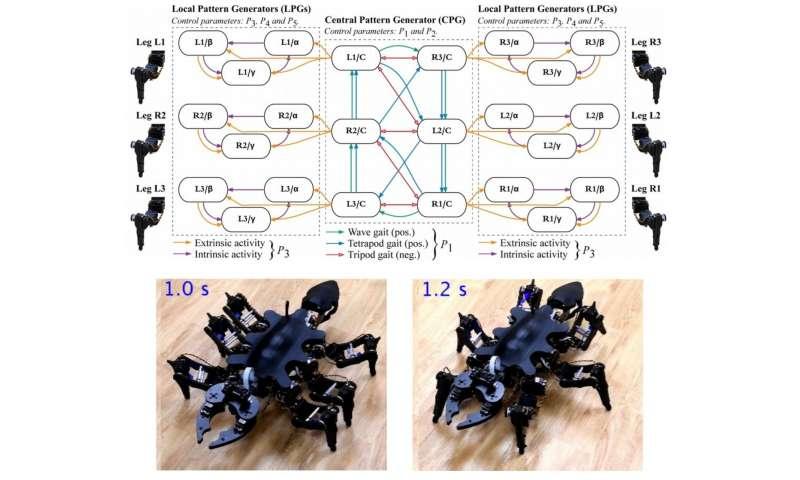Tokyo Tech's six-legged robots get closer to nature