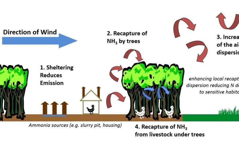 Trees can help mitigate ammonia emissions from farming