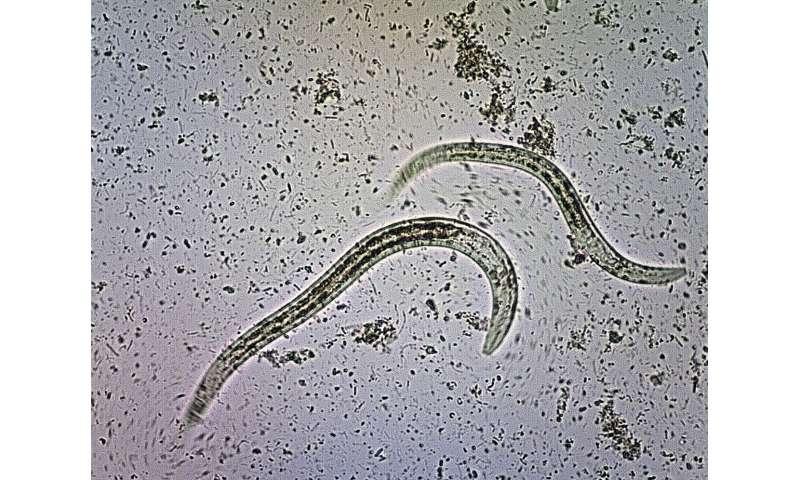 Tropical disease target of Australian alert