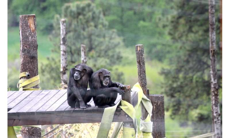 Turmoil behind primate power struggles often overlooked by researchers