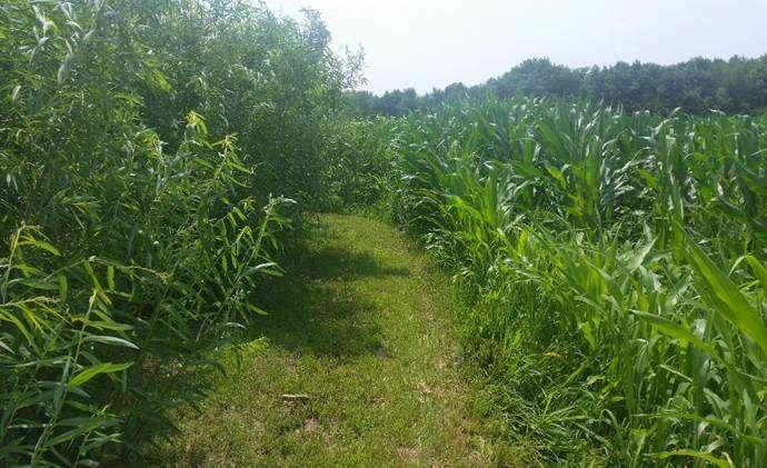 Convertir las tierras agrícolas marginales en una victoria para los agricultores y los ecosistemas.