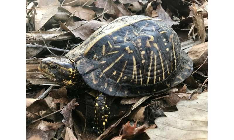 Turtle shells help decode complex links between modern, fossil species