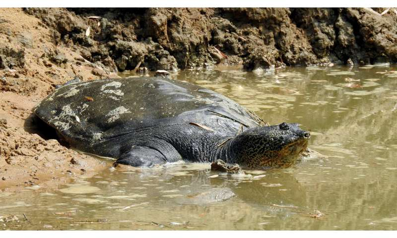 Turtles in Trouble: New Report Profiles World's Most Endangered Tortoises and Freshwater Turtles