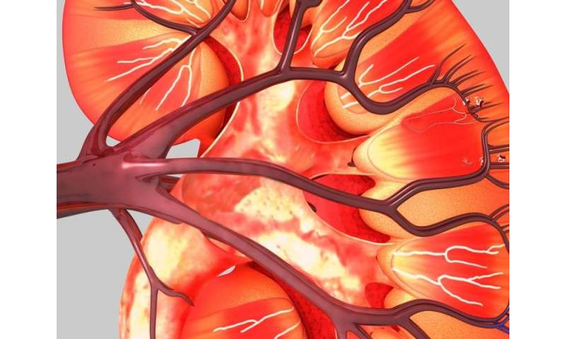 Type 2 diabetes ups risk of renal cancer in women, but not men
