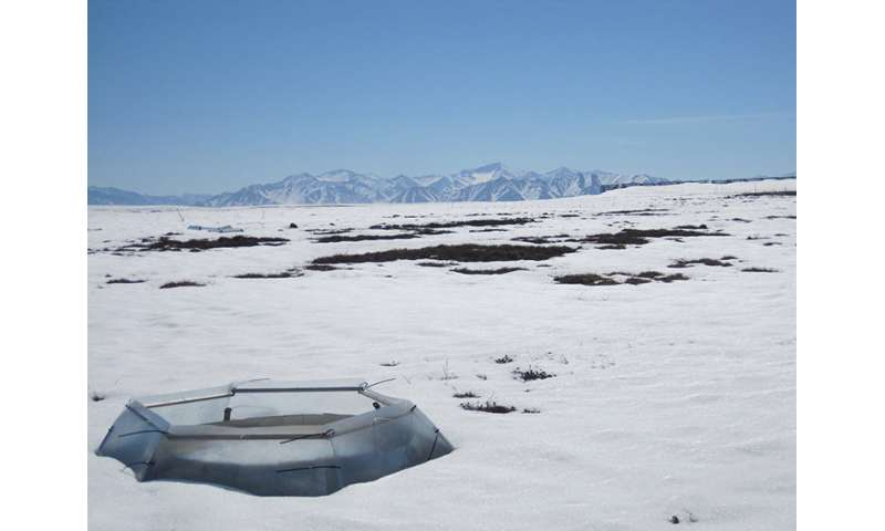 Warming alters predator-prey interactions in the Arctic