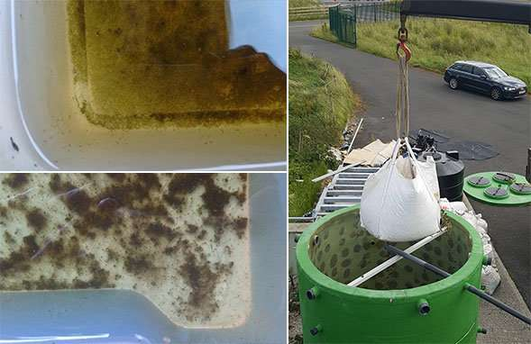 Worms, water fleas and bacteria could bring clean water to remote areas
