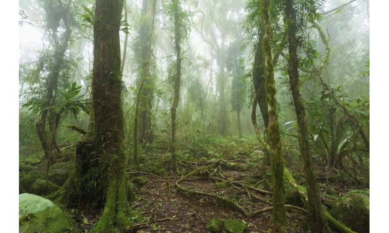 Climate change will make QLD's ecosystems unrecognisable – it's up to us if we want to stop that