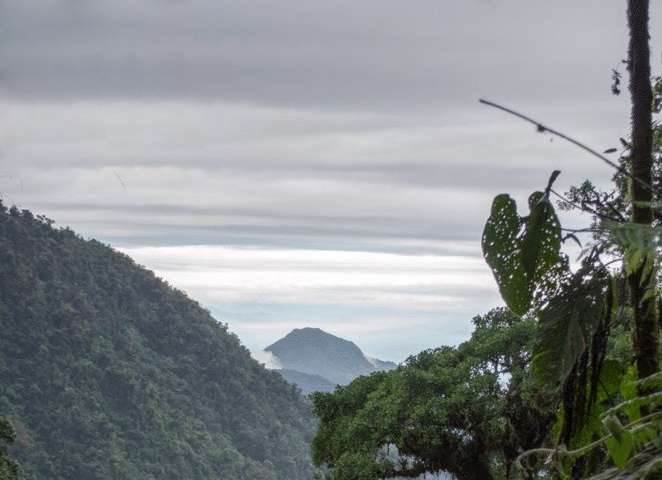 Climate change will likely cause darker tropical forests, researchers say