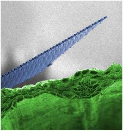 Engineers develop ultrathin, ultralight 'nanocardboard'