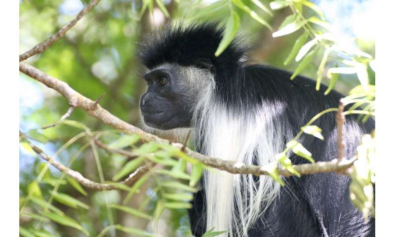 New research could reduce primate electrocutions and help conservation strategies