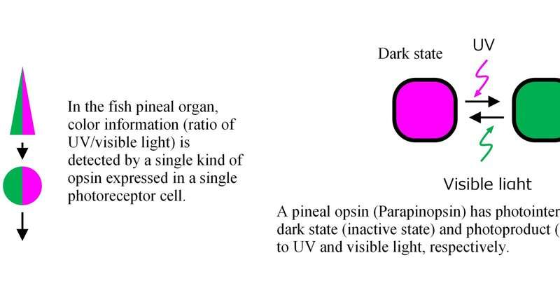 Discovery of a simplest mechanism for color detection