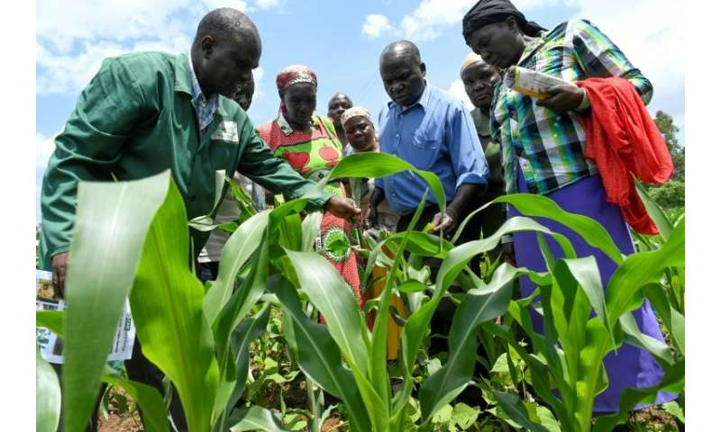 Understanding the armyworm: Plant expert Lukas Wekesa, left, offers advice to farmers facing an outbreak of the pest in Vihiga,
