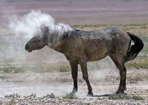 Drought forces emergency measures for US West's wild horses