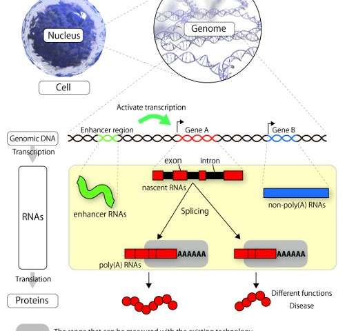 Researchers successfully sequence total RNA of single cells