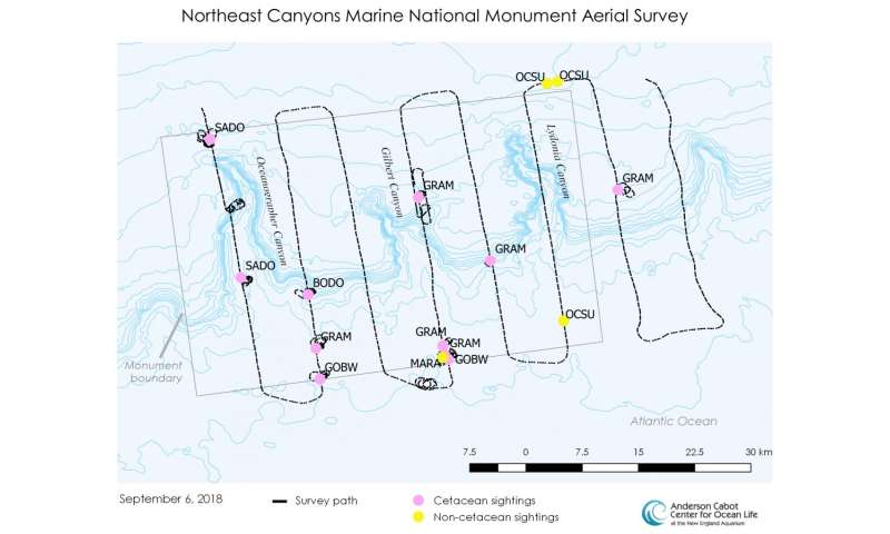 Aerial survey reveals great diversity and abundance in NE Canyons Marine National Monument
