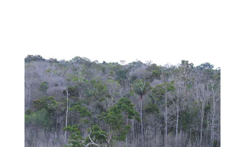 Amazonian forests that are not climate change