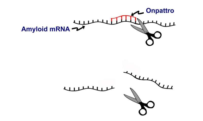 Approval of first RNA interference drug – why the excitement?