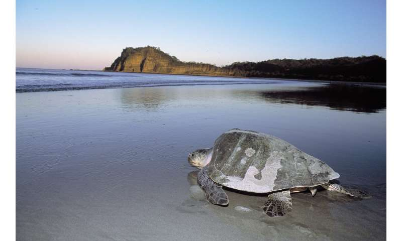 A sea turtle paradise in the land of lakes and volcanoes