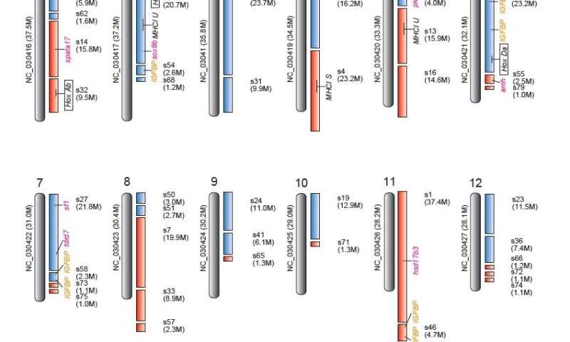 Asian catfish genome decoded