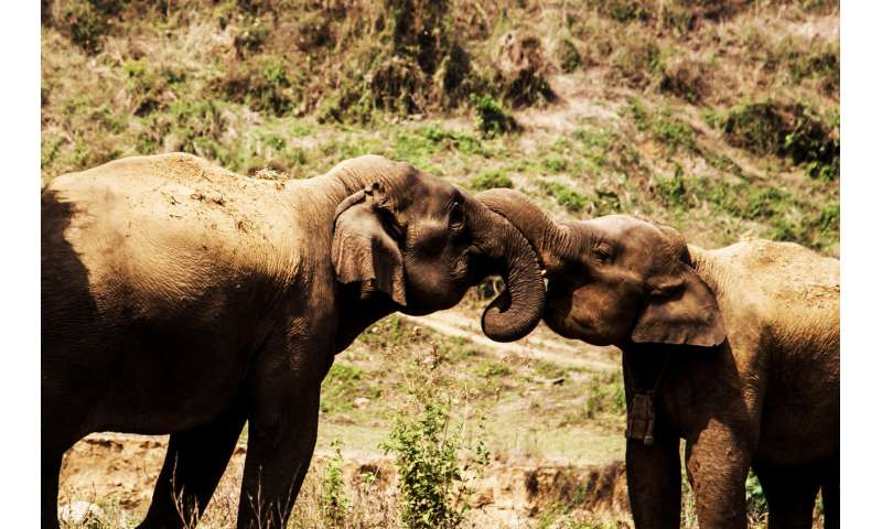 Asian elephants have different personality traits just like humans