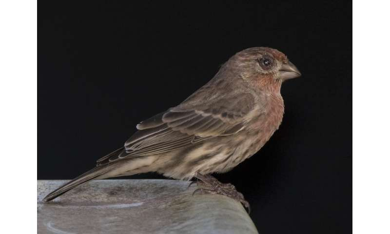 Bird bacteria study reveals evolutionary arms race