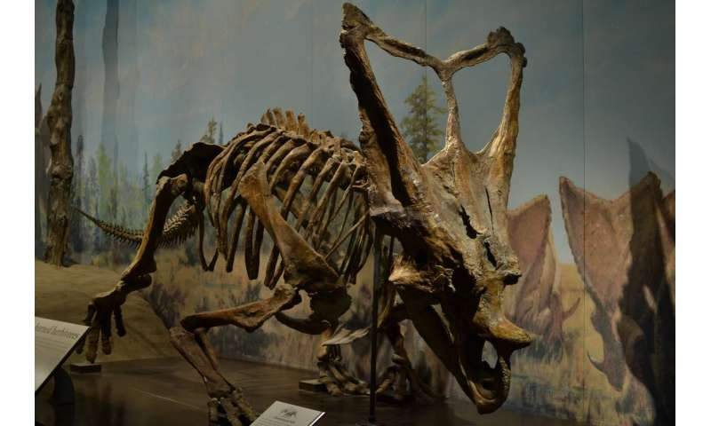Dinosaur frills and horns did not evolve for species recognition