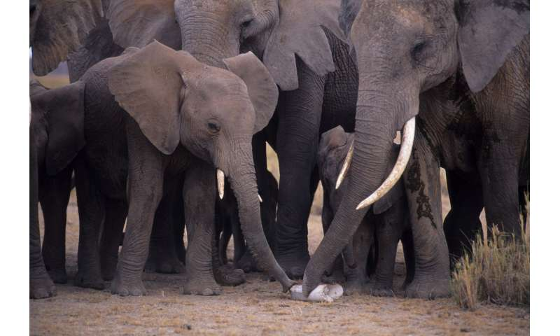 DNA tests of illegal ivory link multiple ivory shipments to same dealers