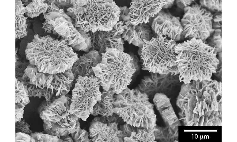 Electron microscope provided look inside the organic chemical reaction