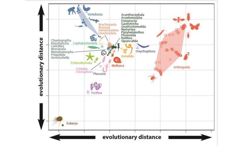Evolutionary origins of animal biodiversity