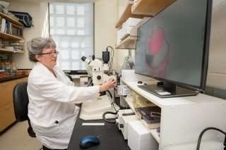 Eye research targets scar tissue that forms after surgery