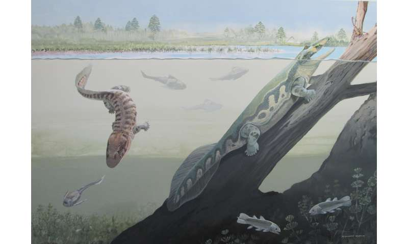 First tetrapods of Africa lived within the Devonian Antarctic Circle
