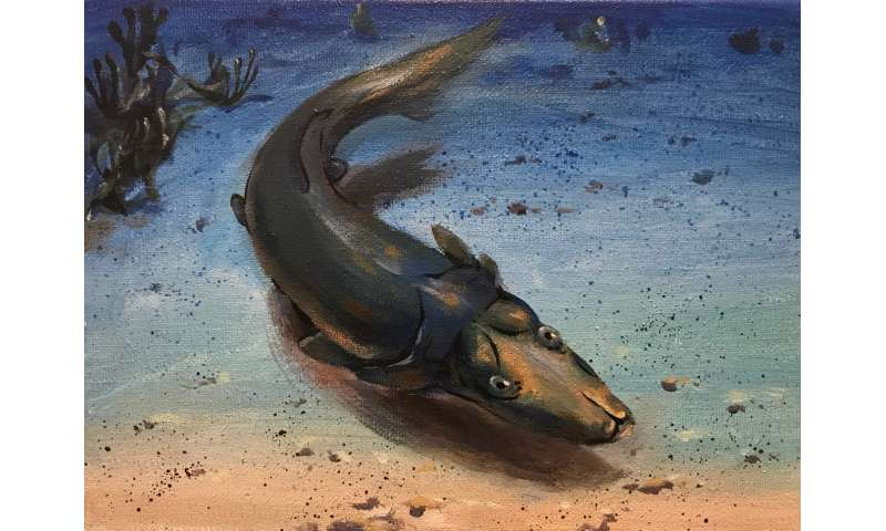 Fossil fish with platypus-like snout shows that coral reefs have long been evolution hotspots