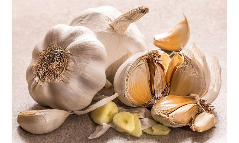 Essential oils from garlic and other herbs kill 'persister' Lyme