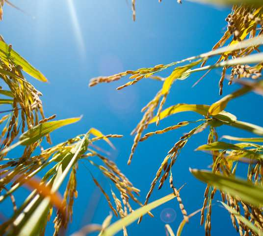 Hot temperatures can trigger an RNA response in plants