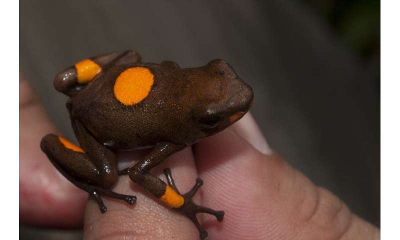 How naming poison frogs helps fight their illegal trade