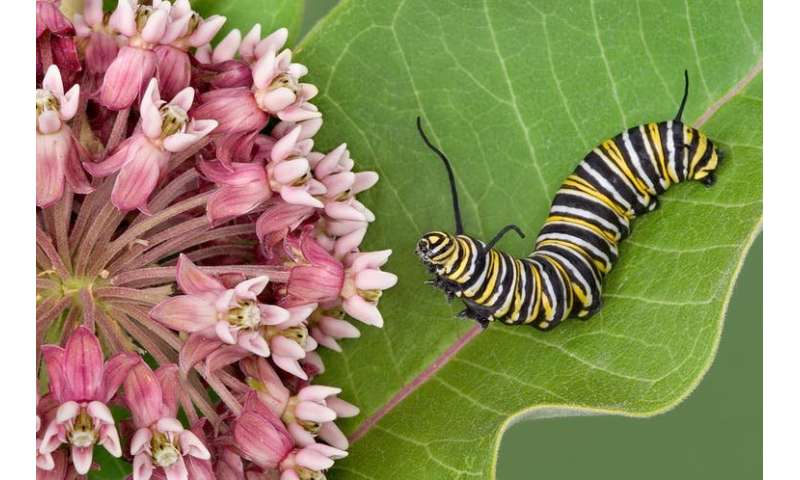 How to fight Insectageddon with a garden of native plants
